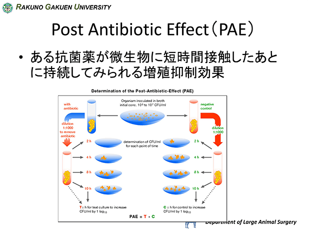 スライド11:Post Antibiotic Effect(PAE)